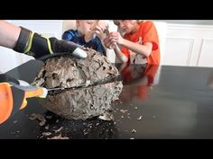 VIDEO: Here's What He Finds After He Takes A Wasp Nest And Cuts It In Half With A Bread Knife… – AWM