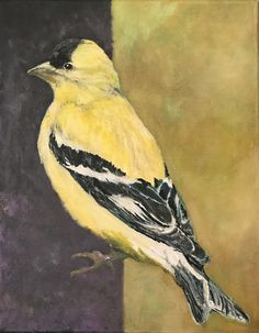 American Goldfinch, for Carel Fabritius, 2017-9-24, Acrylic, 14x11