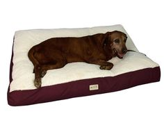 Armarkat Pet Bed Mat - Burgundy & Ivory - a heavy duty canvas and soft plush dog pillow with a waterproof and skid-free base to last and last while keeping your dog safe and comfortable. Cheap Dog Beds, Cool Dog Beds, Dog Couch, Dog Pillow Bed, Bed Mats, Orthopedic Dog Bed, Pet Beds, Doggie Beds, Large Dogs