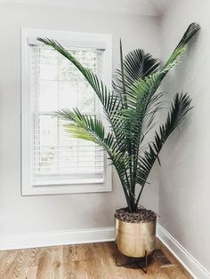 Home Design And Decor Ideas And Inspiration Gold flower pot Palm tree Best house plants Best tall house plants Potted palm trees Best indoor plants Large flower pots Potted Palm Trees, Potted Palms, Trees To Plant, Palm Plants, Palm Tree Plant, Big Plants, Desert Plants, Cactus Plants, Tall Indoor Plants