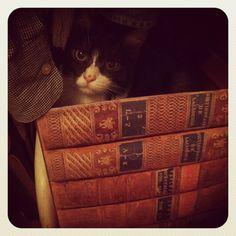 Smart kitty !