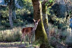 Deixa entrar o sol Woods, Portugal, Pictures, Sun, Animals, Photos, Forests, Photo Illustration, Resim