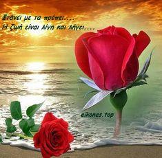 Σοφά λόγια για τη ζωή σε εικόνες - eikones top Beautiful Flowers Images, Beautiful Love Pictures, Love You Images, Romantic Flowers, Beautiful Gif, Beautiful Roses, Rose Images, Flower Images, Flower Art