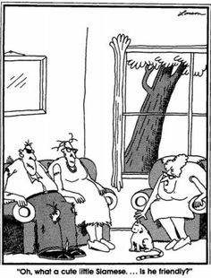 Your daily Far side comics. I have had this on my refrigerator for years and years. It's my favorite!! I need this in poster size!