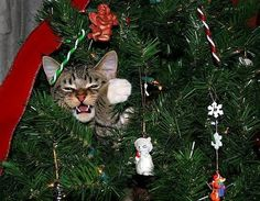 Funny Animal Pictures - View our collection of cute and funny pet videos and pics. New funny animal pictures and videos submitted daily. Keep Calm and Chive On! Cat Christmas Tree, Christmas Kitten, Christmas Animals, Christmas Holidays, Christmas Ornaments, White Christmas, Happy Holidays, Merry Christmas, Holiday Photos