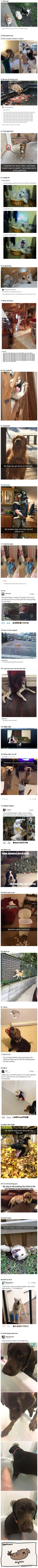 """27 Funny Photos That Will Make You Say, """"I LOVE DOGS"""""""