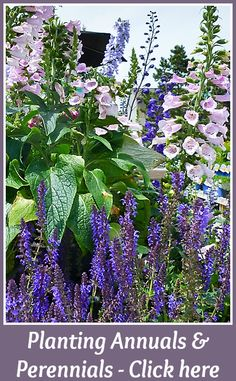 The most crucial step to designing your landscape to bloom all summer is to create a plan before you buy any plants or dig a single hole. Consider sun exposure, soil quality, drainage, and availabl… Beginning Of Spring, Flowers Perennials, Summer Garden, Flower Beds, Mother Earth, The Great Outdoors, Garden Landscaping, Color Splash, Gardening Tips
