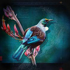 Art Print - x Tui Bird, New Zealand Landscape, Kiwiana, Bird Drawings, Beautiful Birds, Beautiful Pictures, Bird Art, Love Art, Art Forms