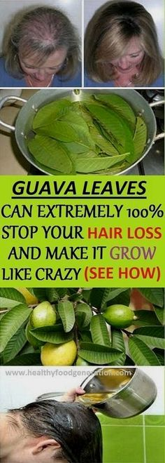 #Health Benefits of Guava Leaves: Hair – Guava leaves are a great #remedy for hair loss. They contain vitamin B complex (pyridoxine, riboflavin, thiamine, pantothenic acid, folate and niacin) which stops the hair fall and promotes hair growth. Boil a handful of guava leaves in 1 litre of water for 20 minutes. Then remove from heat … beauty