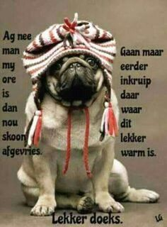 Good Night Quotes, Good Morning Good Night, Evening Greetings, Goeie Nag, Goeie More, Afrikaans Quotes, Good Night Sweet Dreams, Pugs, Winter