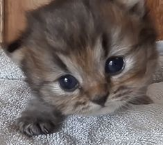 Little mew!Tap the link to check out great cat products we have for your little feline friend!