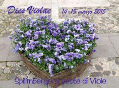Spilimbergo nel Pordenone, Friuli Venezia Giulia