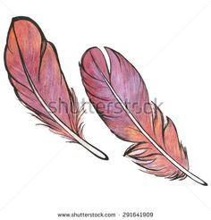 Vector watercolor illustration of feathers