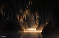 In The Heart of the Swamp by George Popp. Taken in the Atchafalaya Basin a few miles from where I grew up. Or you know The Heart of the Swamp. [2560x1664]