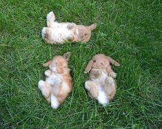 Three baby bunnies watching the sky together - Imgur