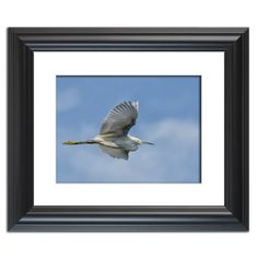 Egret in Flight  Traditional Wildlife Photography Wall Art Prints and Limited Edition Fine Art Prints by nature and landscape photographer Melissa Fague.   Prints are available at: www.pipafineart.com.   We would love for you to follow us at: @pipafineart   #walldecor #wallhanging #homeaccessories #homedecore #wallart #photographyart #photographyartwork #photographywallart #Animalart #wildlifewallart #wildanimals #artwildlife #birds #bird #egret