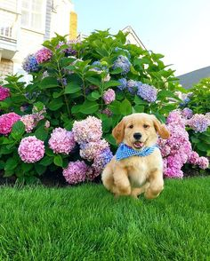 Hy on life 🐶🌸