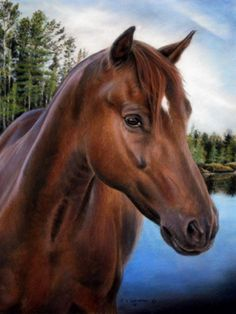 Commissioned Horse Portraits | Paintings from Photos | artist Cynthia Christman