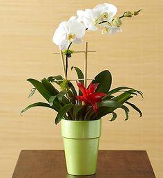 Opulent Orchid Medley- #orchids