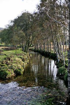 The oaks trail - Pratos e Travessas | Mónica Pinto