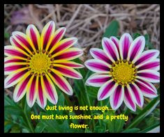 Just living is not enough… One must have sunshine, and a pretty flower. Beautiful Flower Quotes, Flower Delivery, Enough Is Enough, Beautiful Flowers, Love Quotes, Sunshine, Floral Bouquets, Nature, Plants