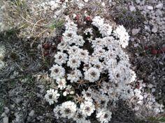 fiori lungo il cammino......................