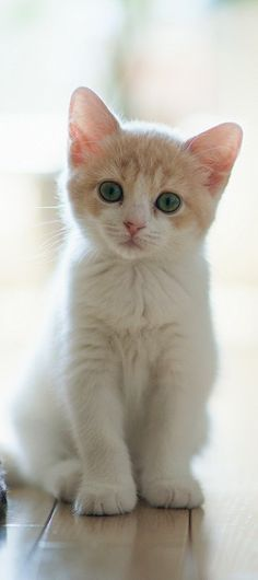 Adorable little cute kitty looking so cute... click on picture to see more