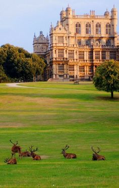 Wollaton Park, Nottingham, England (by Gerry Molumby). ~~ Wollaton Hall and Park is a spectacular Elizabethan mansion and park set in the heart of Nottingham England And Scotland, English Countryside, English Country Houses, English Manor Houses, English Castles, English House, Inverness, British Isles, Great Britain