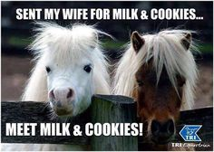 Cute ponies, we need to get over there, where the grass looks greener. Süße Ponys, wir müssen da rüber, wo das Gras grüner aussieht. Pferderassen, Pferdeliebe, Süße Tiere, Tiere, Lustige Tiere, Niedliche Pferde, Pferde Wallpaper, Niedliche Tiere, Pferde