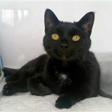 Tibby - Cat Rehoming & Adoption - Wood Green Animals Charity