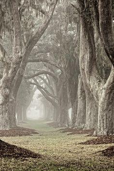 Morning Mist Avenue Photograph by Barbara Marie Kraus -
