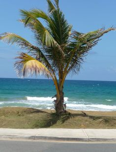 Luquillo one of the most beautiful beaches in the world!!! Puerto Rico .... cI've been here!
