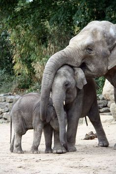Three elephants animal photography pictures and photos Elephant Pictures, Elephants Photos, Save The Elephants, Animal Pictures, Baby Elephants, Cute Baby Animals, Animals And Pets, Funny Animals, Wild Animals