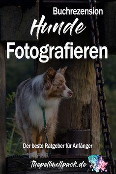 Hunde Fotografieren – Dieser Ratgeber lohnt sich für Anfänger | Hunde | Fotografie | Tierfotografie | Hundebuch | #hundefotografie | thepellmellpack.de