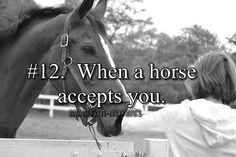 When a horse accepts you.
