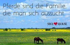 Pferde sind die Familie, die man sich aussucht.  #pferde