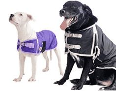 Derby Originals Waterproof Dog Coat Insulated with 1 Year Limited Warranty, Dog Sweaters Cold Weather Dogs, Waterproof Dog Coats, Dog Winter Coat, Dog Raincoat, Dog Blanket, Blanket Coat, Dog Shedding, Dog Diapers, Dog Eyes