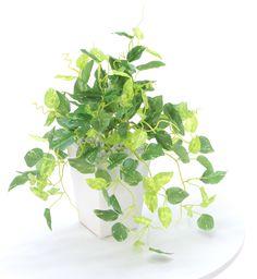 光触媒人工観葉植物 8316「ミニポトス GR 28cm(白陶器)」造花ドットコム zouka.com
