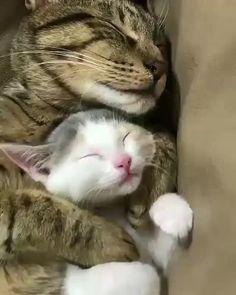 Kitty and kitten