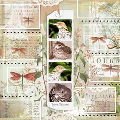 Brown Thrasher #scrapbook #brownthrasher #botanical
