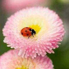 Beautiful Bugs, Beautiful World, Beautiful Flowers, Photo Coccinelle, Bernardo Y Bianca, Baby Clip Art, Jolie Photo, Flowers Nature, Photo Colour