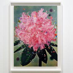 Sebastiaan Bremer - Rhododendron Hybridum Queen Mary - 60x84cm Beschilderde digitale print