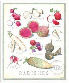 john burgoyne radishes - Google Search