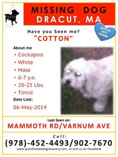 "06MAY2014-MISSING-DRACUT,MA-COCKAPOO: ""Cotton"" is a solid white, 6-7 y.o. @ 20-25 lb., male, Cockapoo missing off of MAMMOTH RD/VARNUM AVE. He can be very timid/shy~PLEASE DO NOT CHASE. If you have seen Cotton or wish to help reunite him with his family, please CALL (978)-452-4493 OR (978)-902-7670~PLZ SHARE. (dv)"