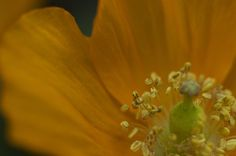 Macro - Flower - Yellow