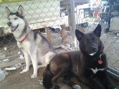 Zinna & Kuro <3