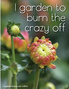 organic gardening for beginners Link Gardening Memes, Gardening Tips, Gardening Vegetables, Gardening Gloves, Flower Gardening, Container Gardening, Home Flowers, Flowers Garden, Garden Journal