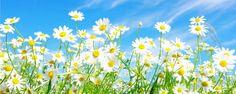 Confira Dicas de Flores para Jardim na Primavera - Para muitas pessoas, a primavera é a estação mais bela do ano. Jardins, ruas, bosques, parques, praças, tudo fica mais verde e florido. Para desfrutarem de todos os encantos que essa época traz, os admiradores e cultivadores de plantas precisam tomar uma série de medidas. Confira algumas dicas de... - http://www.ecoadubo.blog.br/ecoblog/2014/10/10/confira-dicas-de-flores-para-jardim-na-primavera/