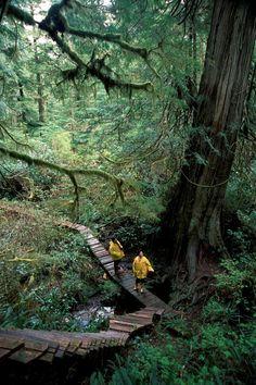 Rainforest (Meares Island) , Tofino, British Columbia