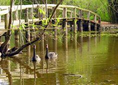 jardim botanico do rio de janeiro - Google-Suche